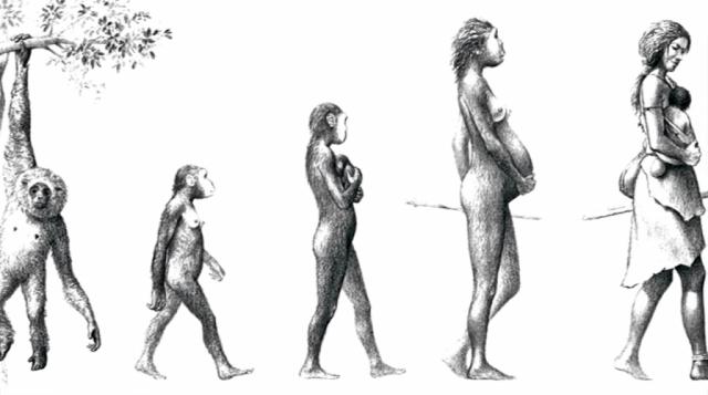 med_evolucion.png